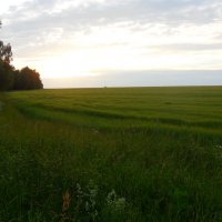 Вид на поле :: ян серга