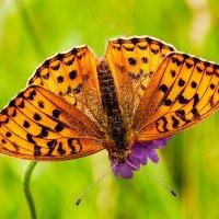 Бабочка :: Ray_575 Ray_575