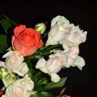Очарованье роз. :: Елена