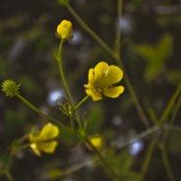 цветочки :: Ирина