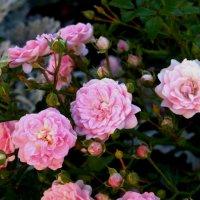 flower notes :: Елена Савельева