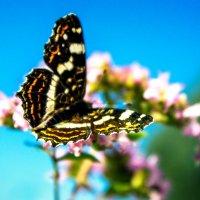 Бабочки :: Наталия Дедович