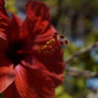 Красота природы в деталях! :: Maria Arnold