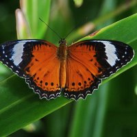 Бабочка. :: Эдуард Закружный