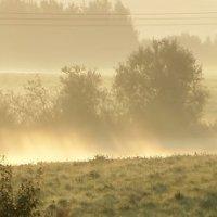 Горячее утро :: Юрий Цыплятников