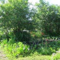 Летний сад :: галина