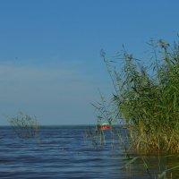 на заливе :: Savayr