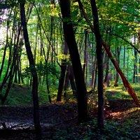 утро в лесу :: юрий иванов