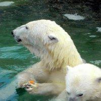 В московском зоопарке. :: Елена