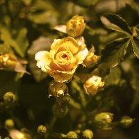 Желтая прелесть :: Кристина Бессонова