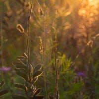 Ловцы солнца... :: Дмитрий Гортинский