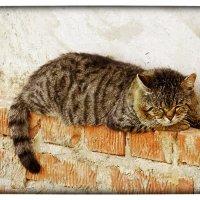старый кот :: Natalia Mihailova