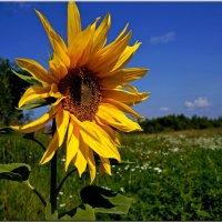Солнечный позитив. :: Любовь Чунарёва