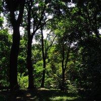 Летний полдень в лесу :: Владимир Бровко