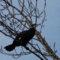 Вот на дереве уток никогда не видела! :: Olga Grushko