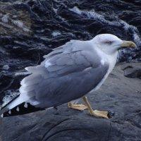Морская чайка. :: Ольга