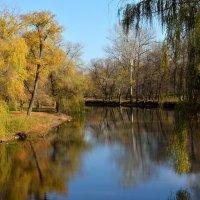 Осенью в парке :: Владимир Павленко