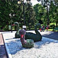 Лебеди. :: Валерия Комова