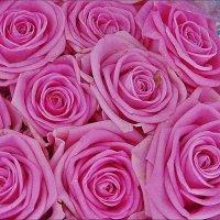 Розовый калейдоскоп :: Нина Корешкова