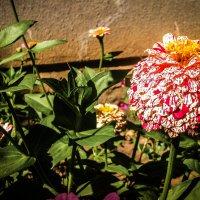Цветок :: Константин Родочинский