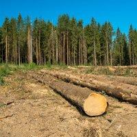 Заготовка леса :: Олег Козлов