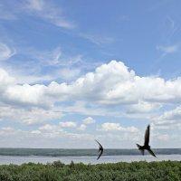 Полет птиц :: Лидия (naum.lidiya)