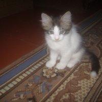 Котёночек :: Tarka