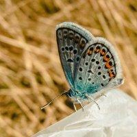 Легкость и беззаботность бабочки :: ~ Лидия ~