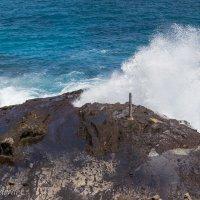 Волны Honolulu :: Vita Farrar