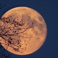Луна, луна... :: Виктор Четошников