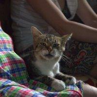 Кот недоволен :: Настя Емельянцева