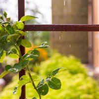 Когда на улице дождь. :: Инта