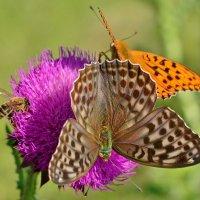 Популярный  цветок :: Геннадий С.