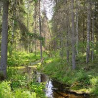 Лесной ручей :: Александр Хаецкий