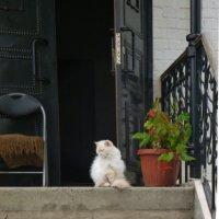 Заходите  в  наш  дом, наши  двери открыты..... :: Galina Leskova