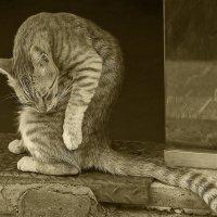 На входе2-из серии кошки очарование моё! :: Shmual Hava Retro