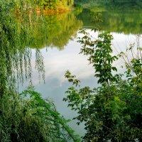 Небо в зеркале пруда... :: Тамара (st.tamara)