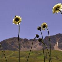 ...скромный вклад в цветочную тему... :: Ольга Нарышкова