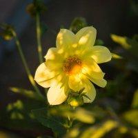 Цвета солнца... :: Павел Сухоребриков