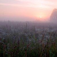 туманное утро :: Эльмира Суворова