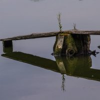 Время,вода,дерево... :: Юрий Анипов