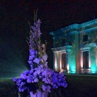 Фиолетовая ночь :: ВАЛЕРИЙ