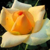 Прекрасное откровение... :: Тамара (st.tamara)