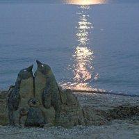 Черноморские пингвины. Вечер... :: Александр