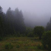 Тумани Східниці :: Дмитрий Гончаренко