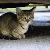 Бездомный котенок :: Александр Сво