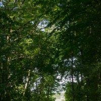 Лесная тропа :: Dmitry Bulanov