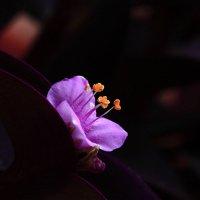 цветочек :: Сергей Борденов