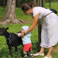 Вот вы какие козы..... :: Tatiana Markova