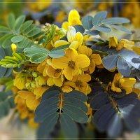 Цветы :: Viktor Rusakov - project Русаков